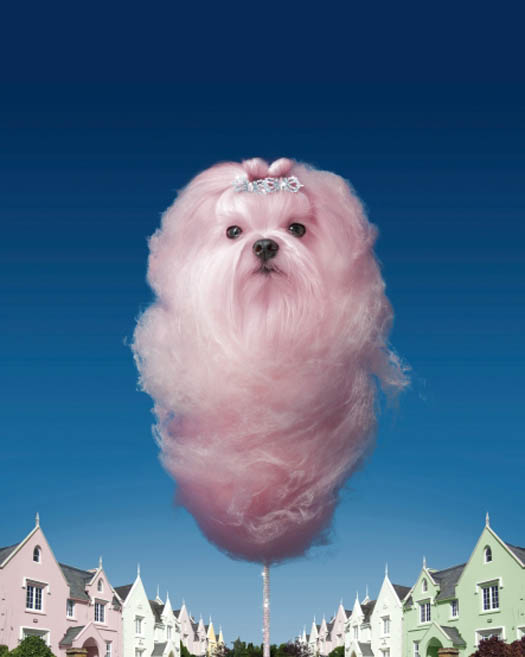 Dog Cotton Candy